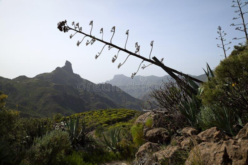 Naturaleza imponente en las montañas Cruz de Tejeda en Gran Canaria, Canarias debajo de la bandera española foto de archivo libre de regalías