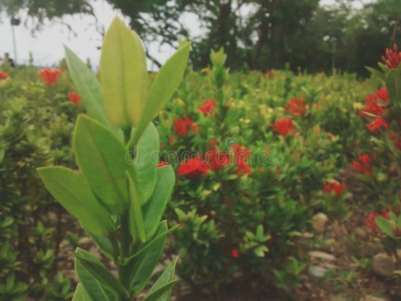 Naturaleza royalty free stock photo