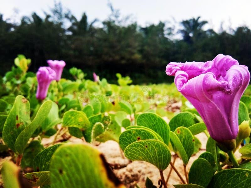 Naturaleza lateral de la playa foto de archivo libre de regalías