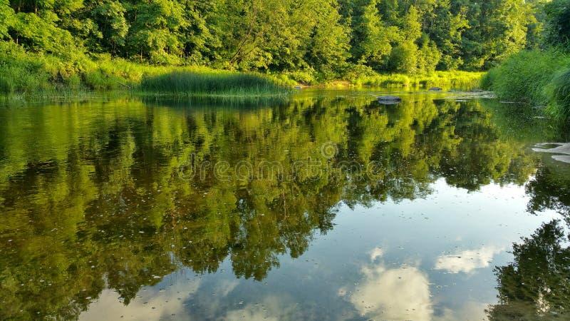 Naturaleza letona por la tarde del verano fotografía de archivo