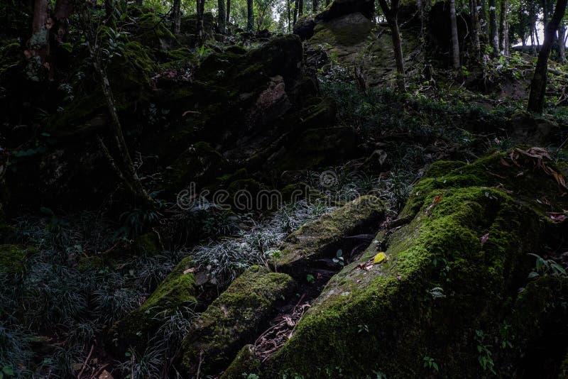 Naturaleza oscura abstracta fotografía de archivo
