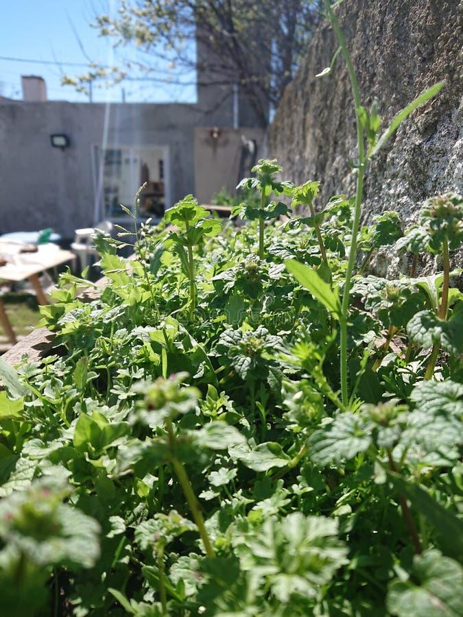 Naturaleza, plantas en cantero foto de archivo