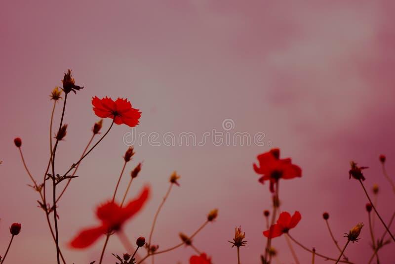 Naturaleza rosada del fondo de la flor en la primavera o el verano Floración de la belleza imagenes de archivo