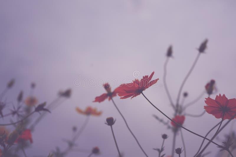 Naturaleza rosada del fondo de la flor en la primavera o el verano Floración de la belleza imágenes de archivo libres de regalías