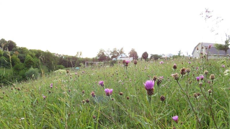 Naturaleza rural en las extensiones rusas fotografía de archivo libre de regalías