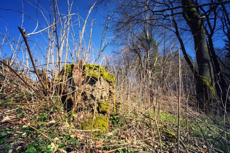 Naturaleza salvaje en el bosque alemán rural en primavera fotografía de archivo libre de regalías