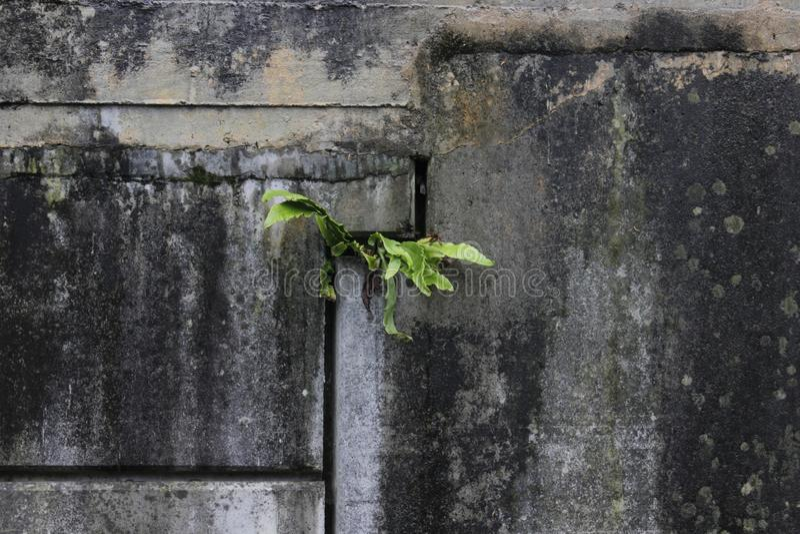 Naturaleza sola foto de archivo