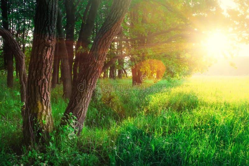 Naturaleza soleada de la primavera Fondo tranquilo Paisaje escénico imagen de archivo
