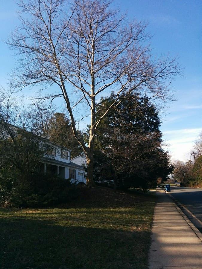 Naturaleza suburbana foto de archivo libre de regalías