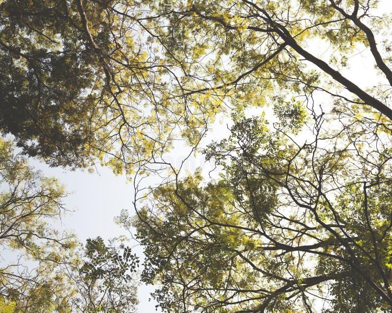 Naturaleza tranquila Forest Tropical Concept de la soledad de los árboles fotografía de archivo