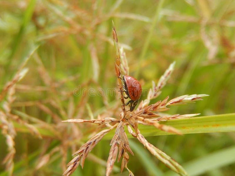 Naturaleza tropical - insectos brasileños de la naturaleza de la belleza foto de archivo