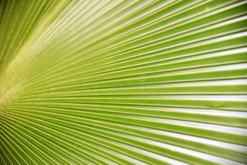 Naturaleza verde de las hojas de palma imágenes de archivo libres de regalías