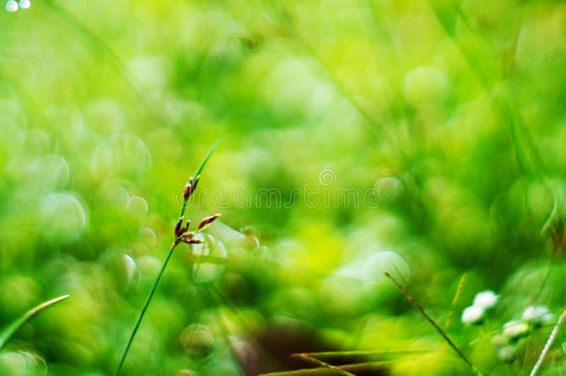 Naturaleza verde del bokeh ligero abstracto de la hierba verde fotos de archivo