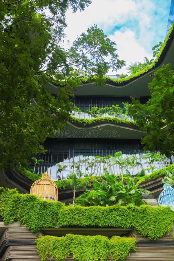 Naturaleza verde Singapur bot?nico foto de archivo libre de regalías