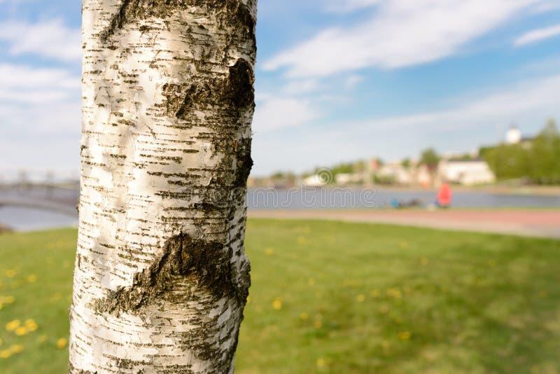 Naturaleza y árbol en el agua y el prado agradables fotografía de archivo libre de regalías
