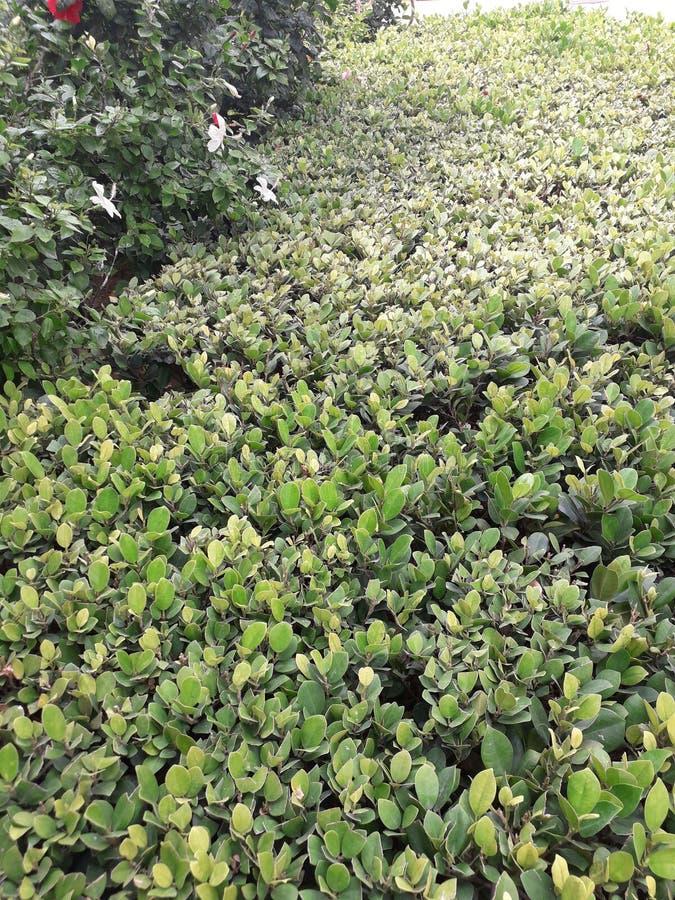Naturaleza y árbol verde y hermoso imagen de archivo