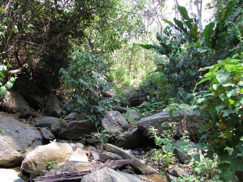 Naturaleza y el caminar más pitier del Henrio del parque nacional de Río imágenes de archivo libres de regalías