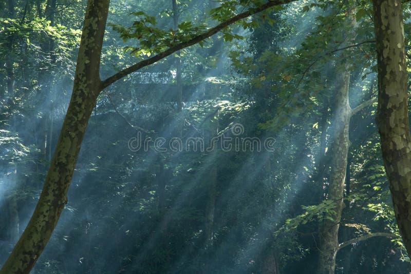 Naturaleza y niebla ligeras de la salida del sol fotografía de archivo libre de regalías