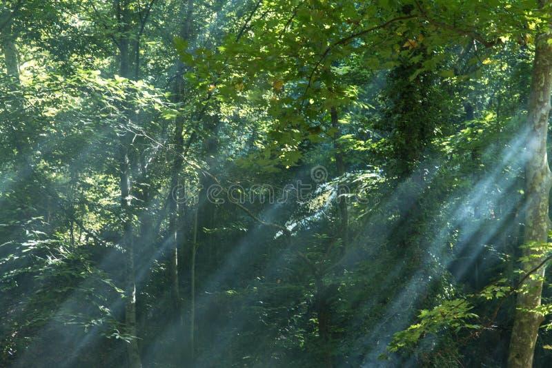 Naturaleza y niebla ligeras de la salida del sol foto de archivo