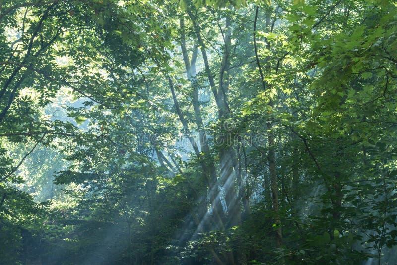 Naturaleza y niebla ligeras de la salida del sol fotos de archivo libres de regalías