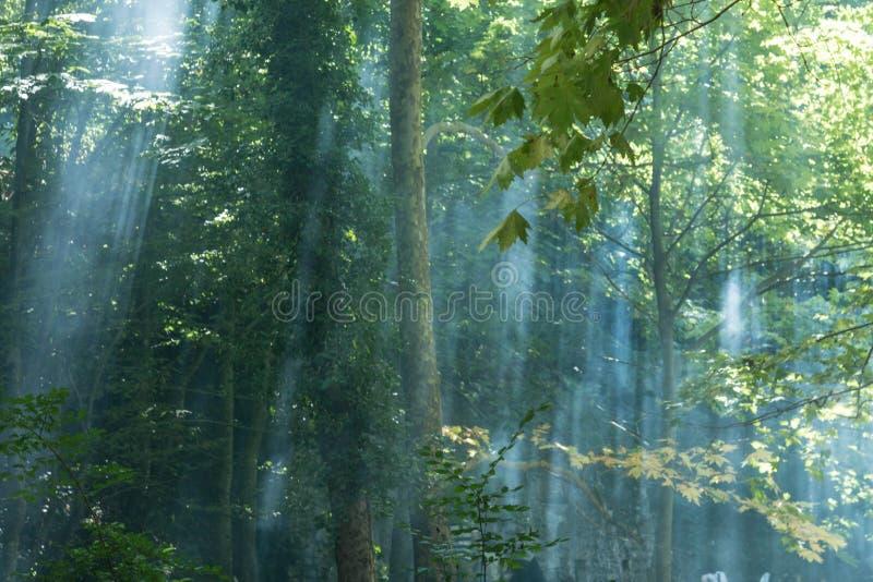 Naturaleza y niebla ligeras de la salida del sol imagen de archivo libre de regalías