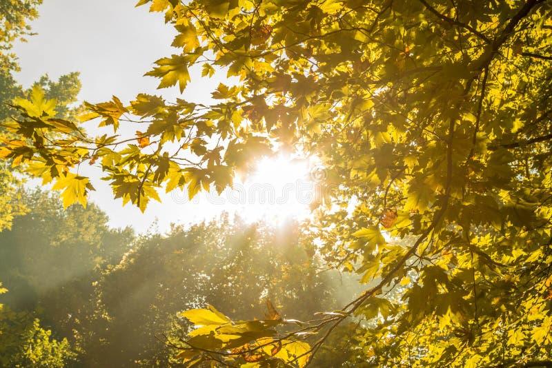 Naturaleza y niebla ligeras de la salida del sol imágenes de archivo libres de regalías