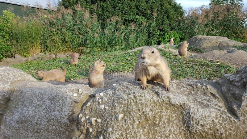 Naturaleza y roedores foto de archivo libre de regalías