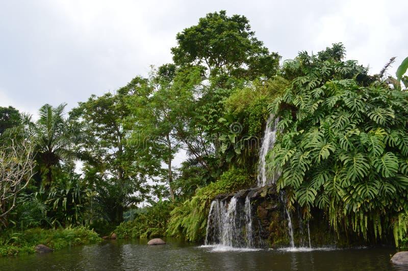 Naturalis ny grön vattennedgång arkivbilder