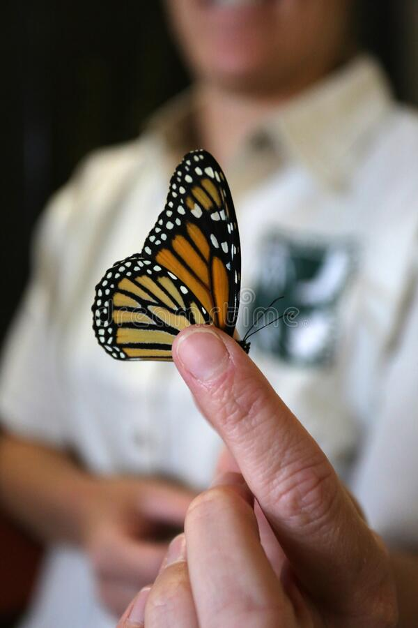 Naturalist Holds Monarch Butterfly arkivbilder
