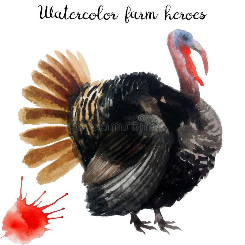 Naturalistic птица фермы акварели рук-притяжки иллюстрация вектора