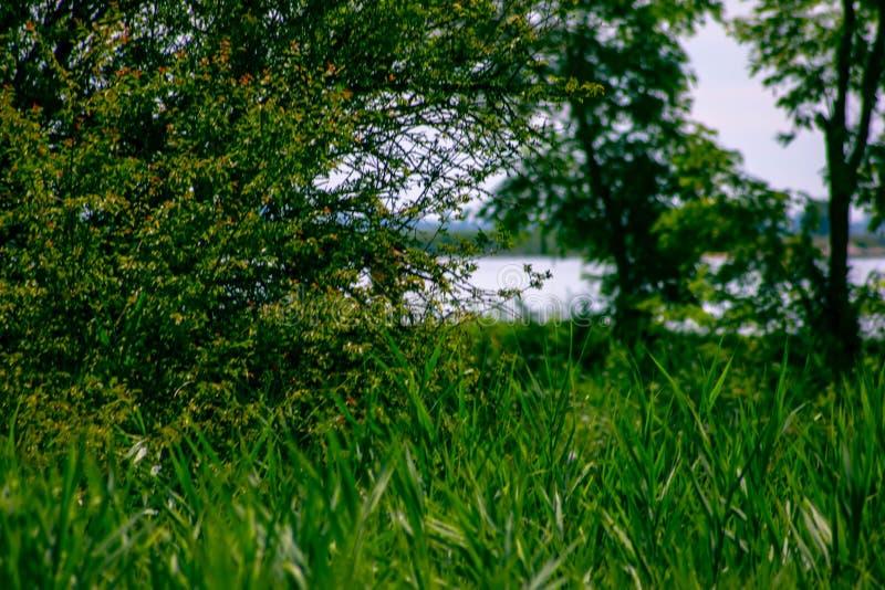 Naturalistisk bakgrund gräs och träd och i bakgrunden kan du se den härliga Venetian lagun royaltyfri foto