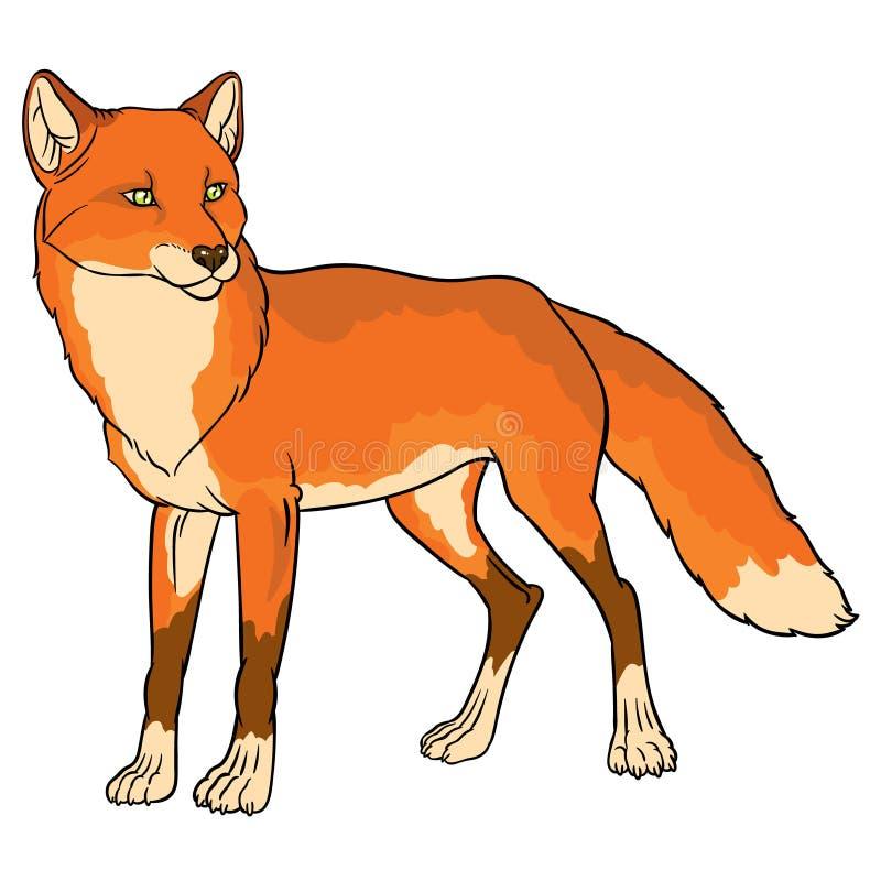 Naturalistisk illustration av räven stock illustrationer