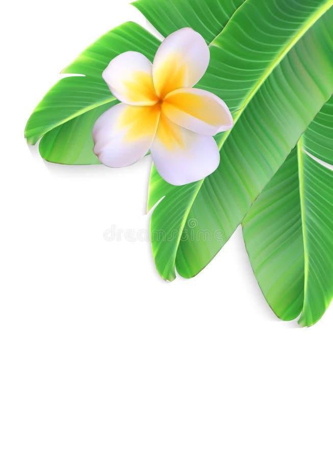 Naturalistyczny liść bananowa palma z kwiatem Wektorowy illustr ilustracja wektor