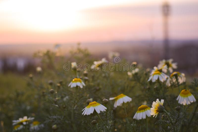 Naturally blossomed flowers royalty free stock image