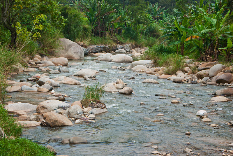 Naturally undeveloped river in Bentong, Pahang, Malaysia. Janda Baik is a popular place for meditation due to the nature peaceful environment royalty free stock photography