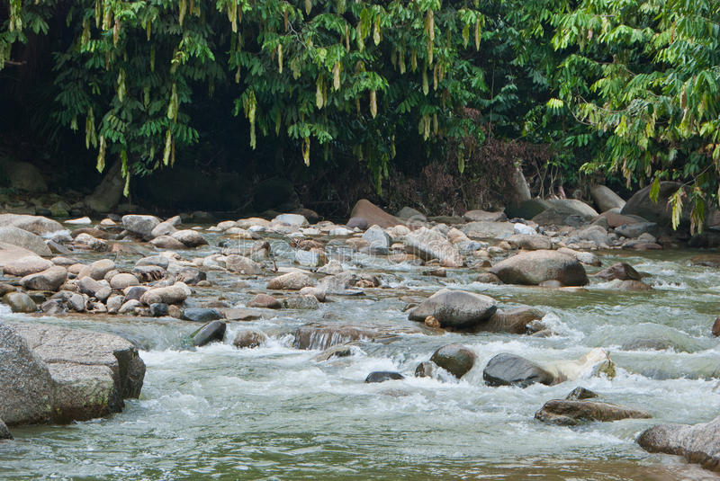 Naturally undeveloped river in Bentong, Pahang, Malaysia. Janda Baik is a popular place for meditation due to the nature peaceful environment royalty free stock photos
