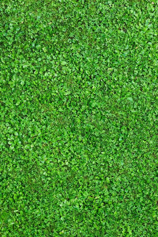 naturalna śródpolna trawa obrazy stock