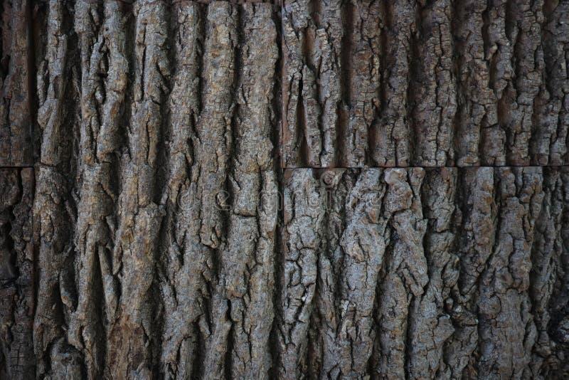 Naturalna drzewnej barkentyny tekstura tekstury korowaty bezszwowy drzewo Nieko?cz?cy si? drewniany t?o dla strony internetowej p zdjęcia royalty free