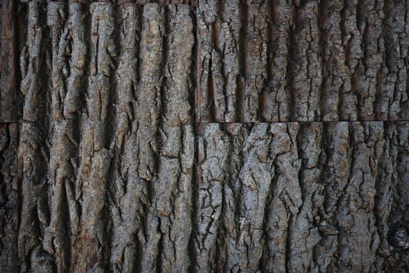 Naturalna drzewnej barkentyny tekstura tekstury korowaty bezszwowy drzewo Nieko?cz?cy si? drewniany t?o dla strony internetowej p fotografia stock