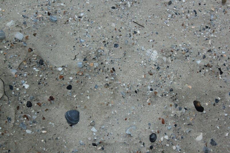 Naturalna sztuka seashells na piaskowatej plaży morze północne w Zeeland w holandiach zdjęcia royalty free