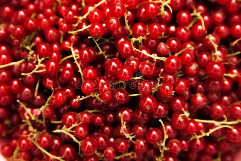 Naturalna tekstura od mnóstwo dojrzałych czerwonych rodzynków w górę Czerwonego rodzynku kopii przestrzeń fotografia royalty free