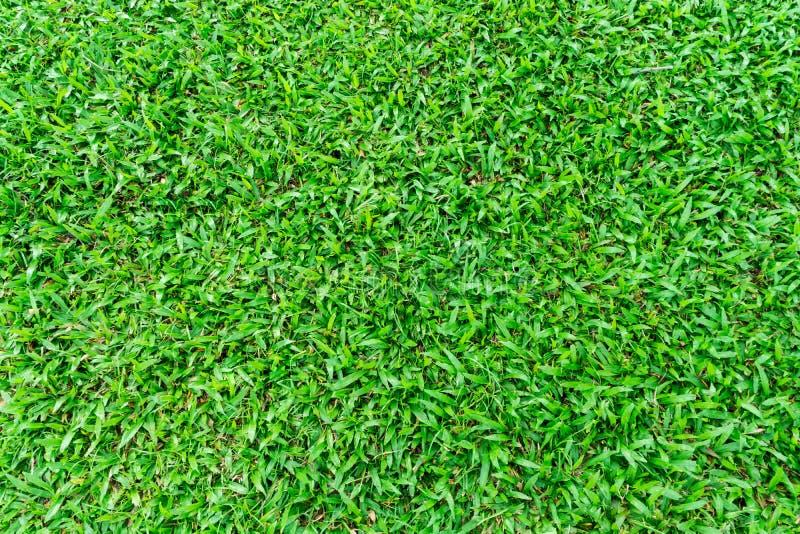 Naturalna Zielona trawa w ogródzie zdjęcia stock