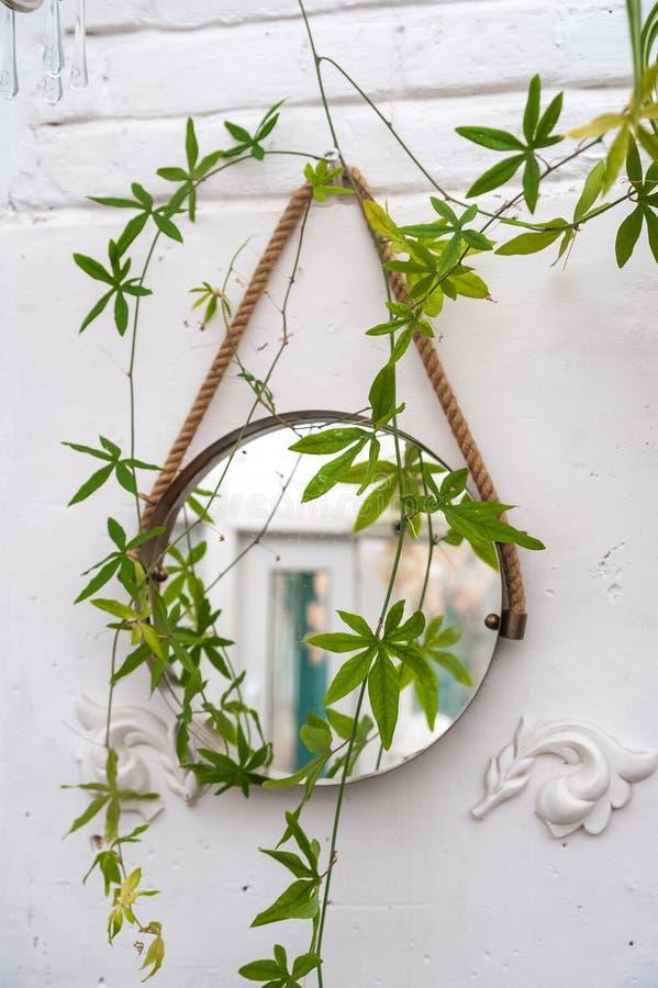 Naturalna zielonej ro?liny li?cia tekstura w ogr?dzie Styl tekstury lustro na ścianie z gałąź passiflora kwiat puszkuj?cy fotografia stock