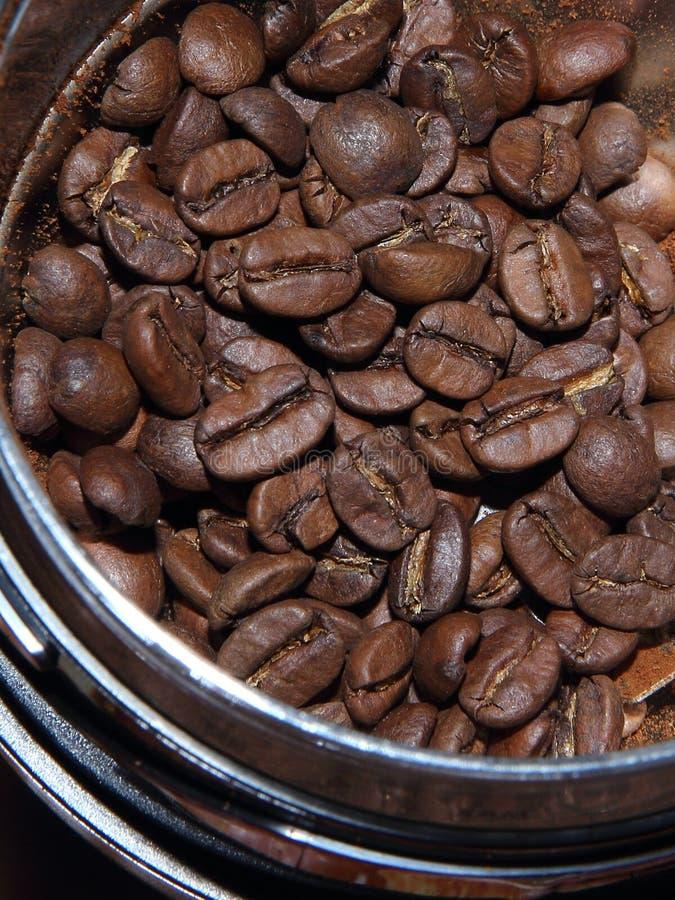 Naturalne aromatyczne wielkie kawowe fasole w kawowym ostrzarzu przed mleć zdjęcia royalty free