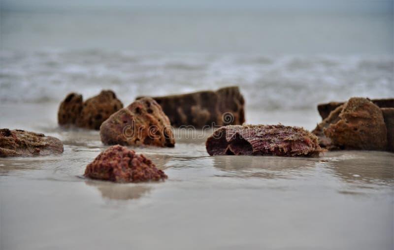 Naturalne gąbki wymywane na plaży zdjęcie royalty free