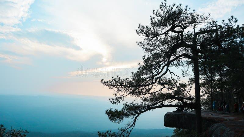 Naturalne gałąź w mgłowym niebie naturalny świat fotografia royalty free