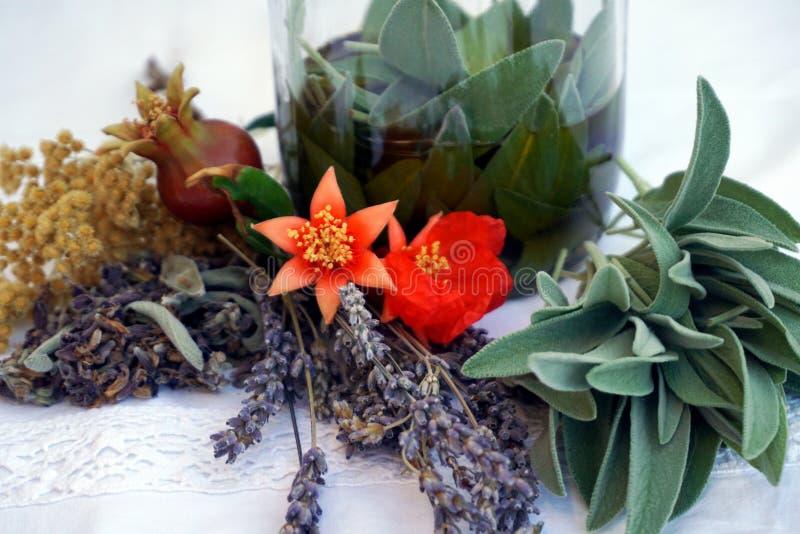 Naturalne, organicznie rośliny dla przygotowania zdrowi ziołowi leczniczy produkty, obraz royalty free