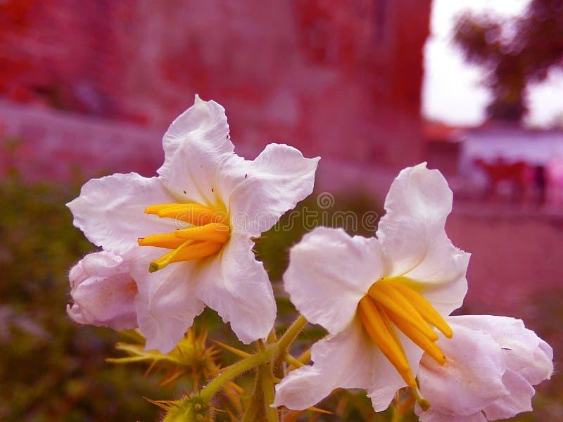 naturalne piękno zdjęcie stock