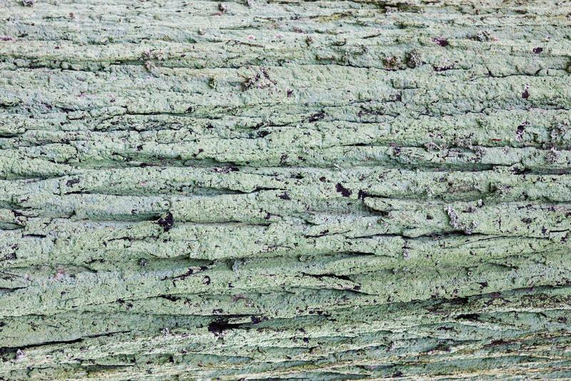 Naturalnego starego drewnianego tła mechata drewniana korowata tekstura obraz stock
