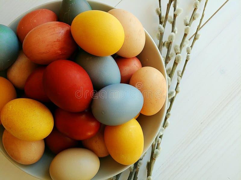 Naturalni farbujący jajka w talerzu na białym drewnianym tle 2 forsują pisklęca pojęcia Easter jajek kwiatów trawa malujących umi obraz stock
